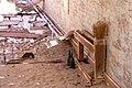 Pomona bowlingbana-3003 - Flickr - Ragnhild & Neil Crawford.jpg