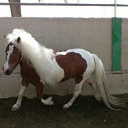 El caballo 187px-Poni_trotando