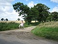 Pony heads for Marble Hill - geograph.org.uk - 510126.jpg