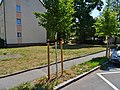 Postweg Pirna (43084547214).jpg