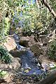 Pretoria Botanical Gardens-010.jpg