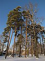 Priedes - panoramio (5).jpg