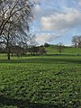 Primrose Hill - geograph.org.uk - 527099.jpg