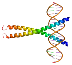 Protein ATF1 PDB 1dh3.png