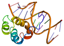 Protein PITX3 PDB 1yz8.png