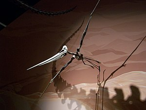 Pelagornithidae - Pteranodon skeleton at the Museum of Ancient Life. This large (and toothless) Late Cretaceous pterosaur was quite similar in size and proportions to Pelagornis and presumably had similar feeding habits.