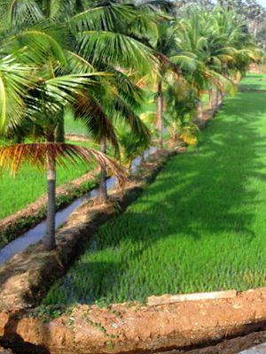 Chittur-Thathamangalam - Pudunagaram