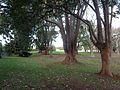 Queens Park, Toowoomba 08.JPG