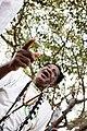 Quilombo dos Palmares é palco de reflexão e festa no 20 de novembro (30354341444).jpg