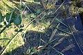 Réserve naturelle Marais Lavours Aignoz Ceyzérieu 23.jpg