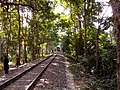 Rail Line.jpg