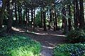 Redwood Memorial Grove 20 2017-06-12.jpg