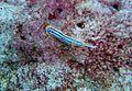 Reef1100 - Flickr - NOAA Photo Library.jpg