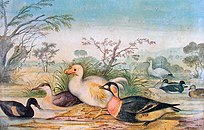 Painting of a white dodo among various birds
