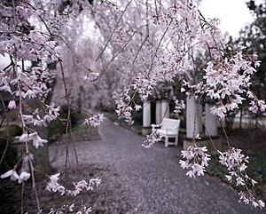 Reynolda Gardens - Image: Reynolda Gardens