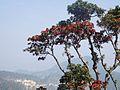 Rhododendron tree 05.jpg