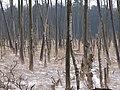 Ribnitzer Großes Moor in winter 8.jpg
