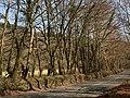 Road near Holne Old Bridge - geograph.org.uk - 1216558.jpg