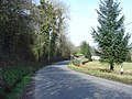 Roadside daffodils near Pant Teg, Llanpumsaint - geograph.org.uk - 1207897.jpg