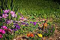 Robin in Garden (11967377543).jpg