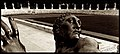 Roma a2 - Augusto De Luca fotografo.jpg