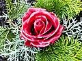 Rosenblüte mit Wachsüberzug.JPG