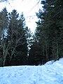 Route enneigée (1).jpg