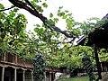 Rozhen Monastery 09-2009 (8).jpg