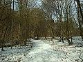 Roztoky, Tiché údolí, zasněžený háj.JPG