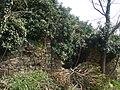 Ruderi di Cecani di sopra coperti dalla vegetazione - panoramio.jpg