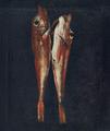 Ruivos (1791) - Morgado de Setúbal.png
