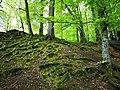 Söderåsen tree and moss.jpg