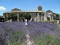 Saint Paul De Mausole - panoramio - marek7400 (1).jpg