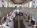 Salón Central del Museo Nacional de Historia Natural durante la Feria Científica Nacional Juvenil.jpg