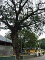 SanNicolas,Pangasinanjf9062 11.JPG