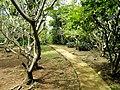 Sankyo Garden - DSC01175.JPG