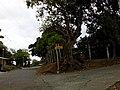 Santa Maria and Barangay's - panoramio (89).jpg