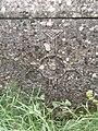 Sarkofag, Bijaći, Kaštel Novi 020.jpg