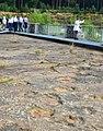 Saurierfährten Obernkirchen Steg Besucher Abdrücke auf Fläche.jpg
