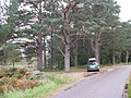 Scots Pines by the Glen Torridon road - geograph.org.uk - 707088.jpg