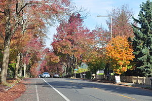 Meadowbrook, Seattle - NE 35th Street in Meadowbrook is one of the few Seattle streets dominated by deciduous trees that change color in the autumn.