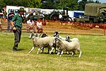 Sheep Dog Display (2621824024).jpg