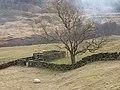 Sheepfold near Dale Head - geograph.org.uk - 725322.jpg