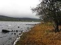 Shore, Inishtemple - geograph.org.uk - 2133350.jpg