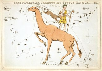 Camelopardalis - Camelopardalis as depicted in Urania's Mirror, a set of constellation cards published in London c.1823. Above it are shown the now-abandoned constellations of Tarandus and Custos Messium.