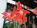 Sikkim flower nursery.jpg