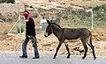 Siq el-Berid-16-Mann mit Esel-2010-gje.jpg