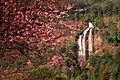 Siriphum Waterfall (Doi Inthanon National Park, Chiang Mai, Thailand).jpg