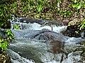 Small rapids - panoramio.jpg