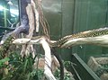 Snakes in Zoo Negara Malaysia (24).jpg